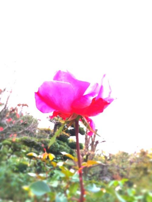 Img_3658_2